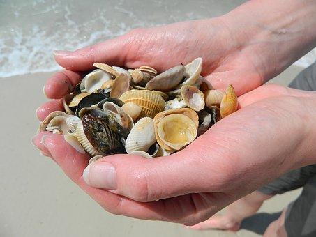 sea-shells-2200287__340