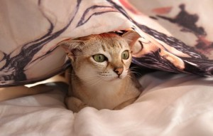 котка в легло